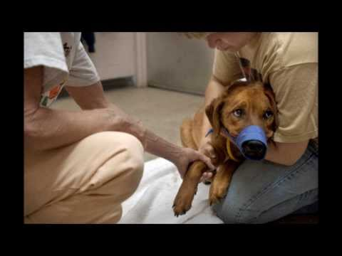 North Brevard Animal Care Center