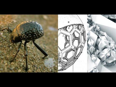 Biomímesis y Biodiversidad