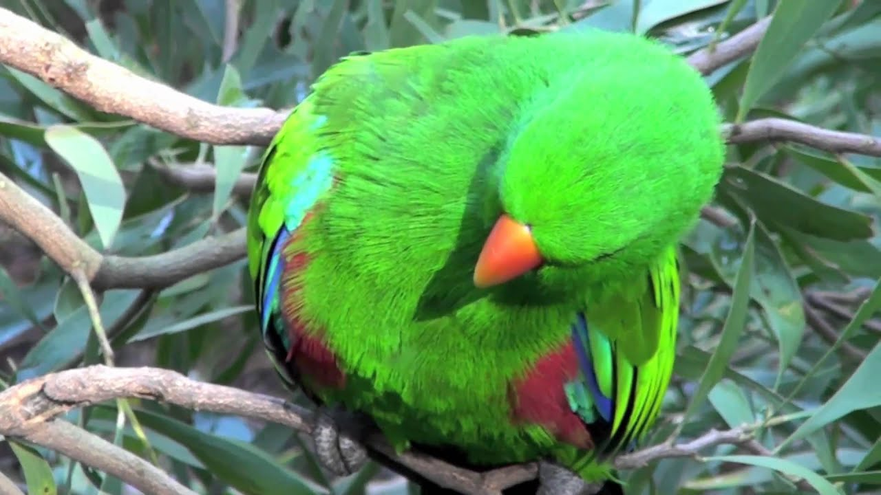 A Few Birds At The Wild Life Melbourne Zoo Australia Incl
