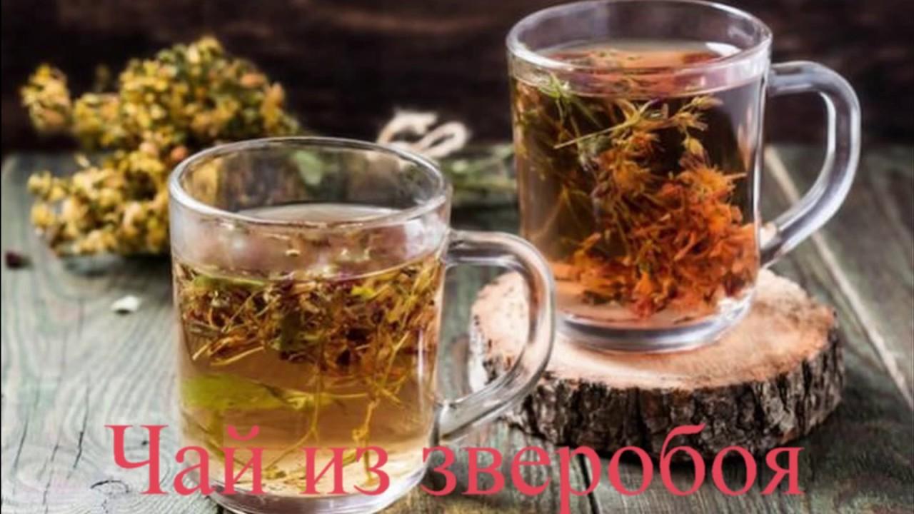 Смотреть Чай из зверобоя польза и вред как заваривать и пить видео