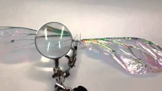 """Craft Insect Wings, 7.5"""" biomimicry artificial wings"""