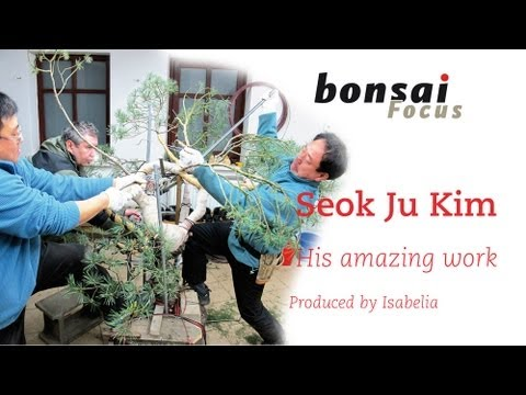 Korean bonsai master Seok Ju Kim