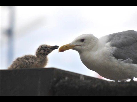 two baby seagulls and their playground/nest area