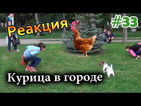 Курица в Городе / Chicken In The City (Реакция 33)