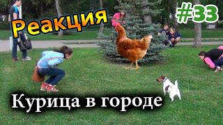 Курица в Городе / Chicken in the City (Реакция 33)
