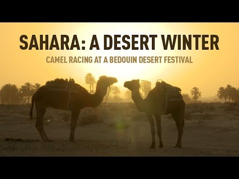Sahara: A Desert Winter. Camel racing at a Bedouin desert festival
