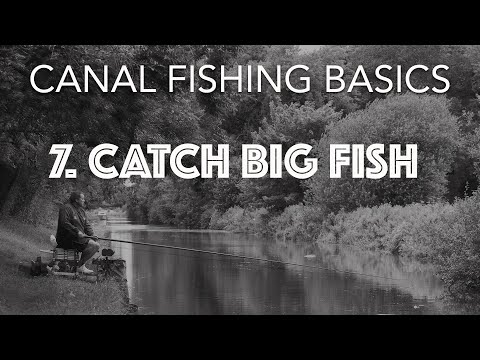 How To Catch Big Canal Fish