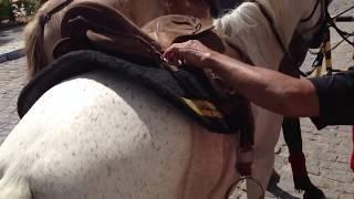 Cobra escondida em sela de cavalo