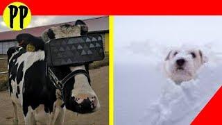 DECLARAN emergencia por Ciclón Invernal / Vacas entran al Mundo VIRTUAL #PODCAST Pepe En Vivo