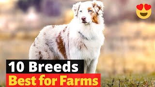 10 Best Dog Breeds for Farms and Agriculture