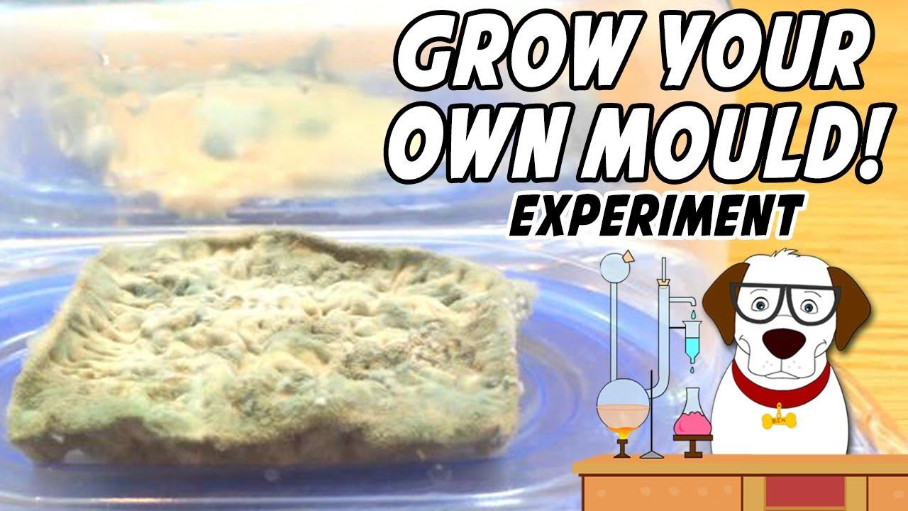 Bread mold lab report