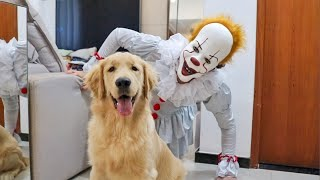 Golden Retriever Puppy Pranked with Pennywise