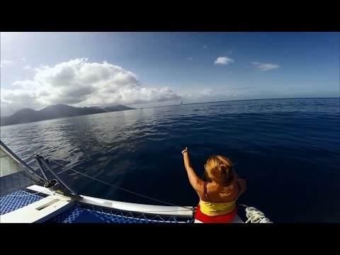 #11 Sailing the Caribbean: Dolphins of Dominica & Sights of St. Lucia