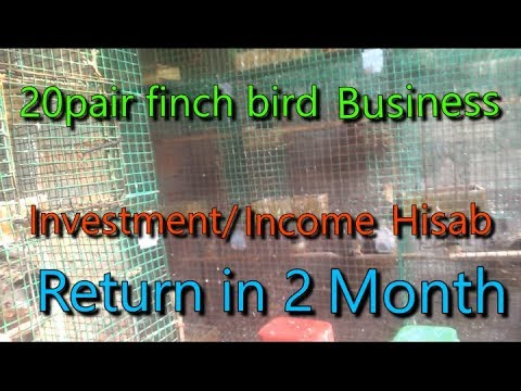 20 Pair Finch Bird Business Setup Invest Or Income Ka Hisab 2019