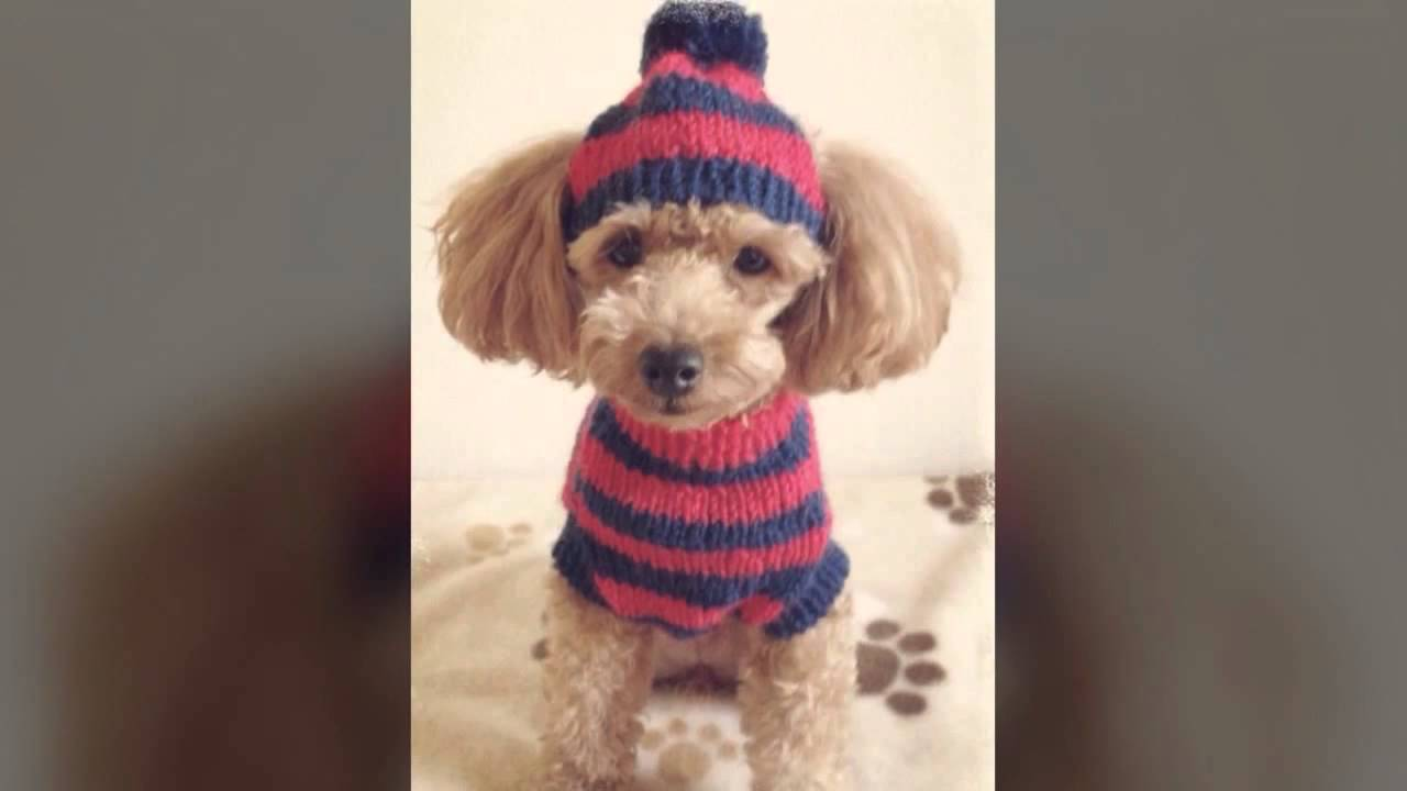 犬の帽子屋☆hat Of The Dog Youtube