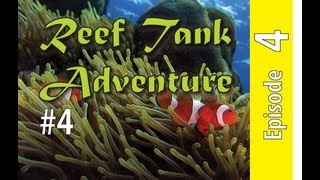 Reef Tank Adventure #4
