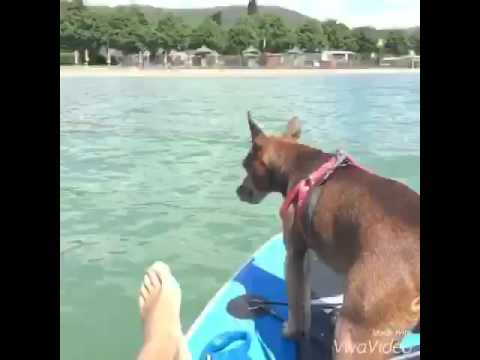 Sup Trasimeno - stand up with my dog