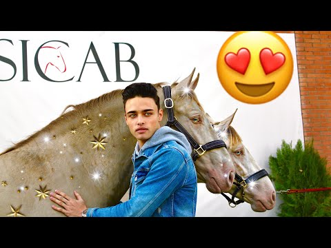 MOST EXPENSIVE SPANISH HORSES IN THE WORLD (SICAB VLOG)