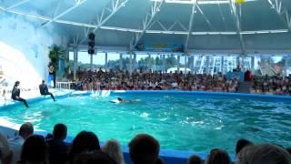 Дельфинарий в Минском зоопарке 2.