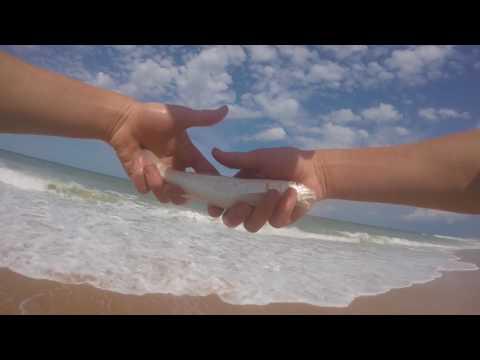 surf fishing flagler beach florida!!
