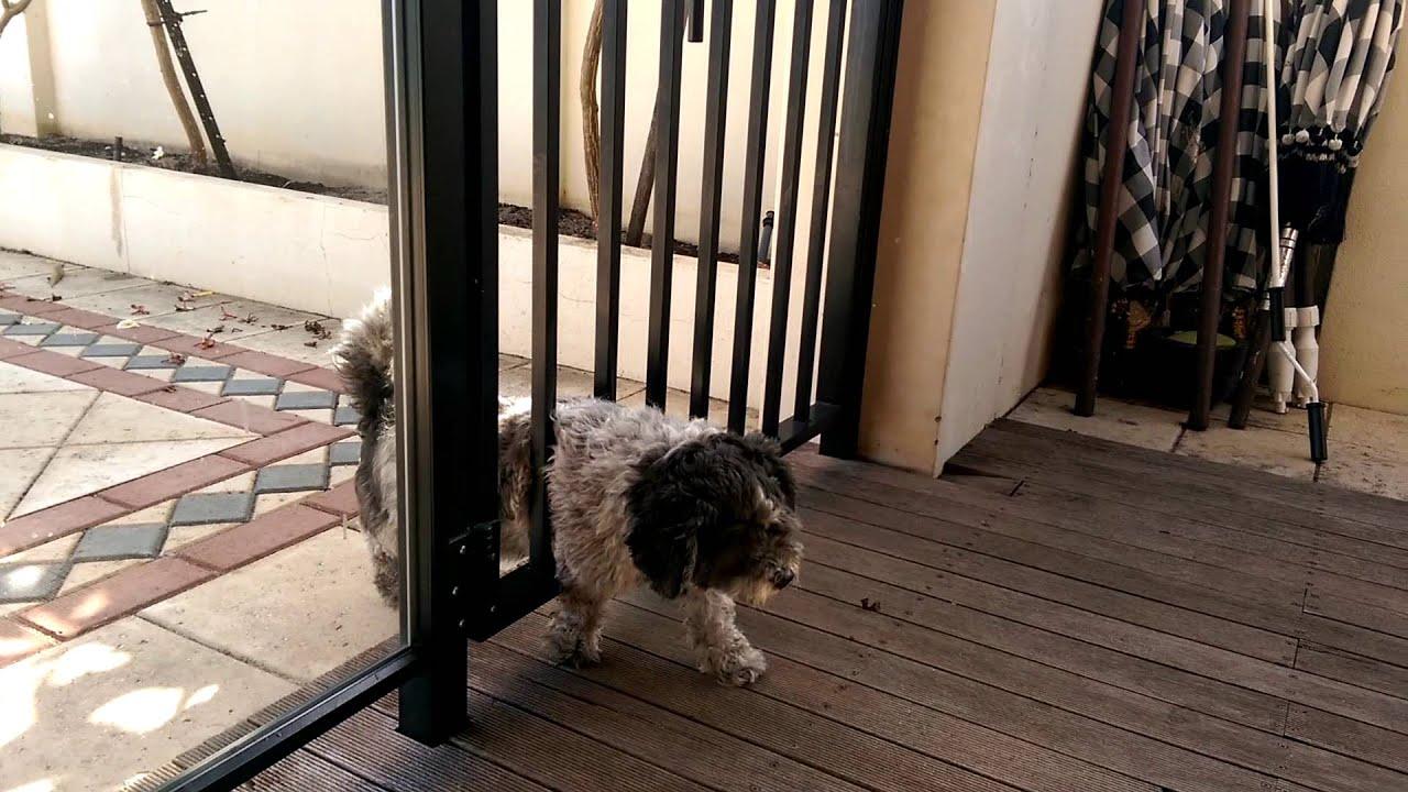 Funny dog squeezing through gate - YouTube