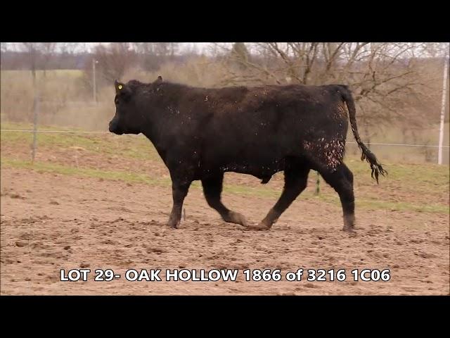Oak Hollow Lot 29