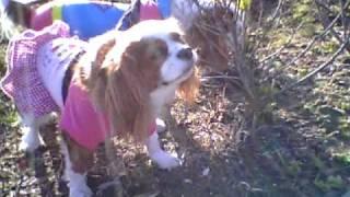 本日祖母の命日で墓参りに愛犬のモカ、ココアといってきました。