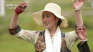 《中国三农报道》 20201119|CCTV农业 - YouTube