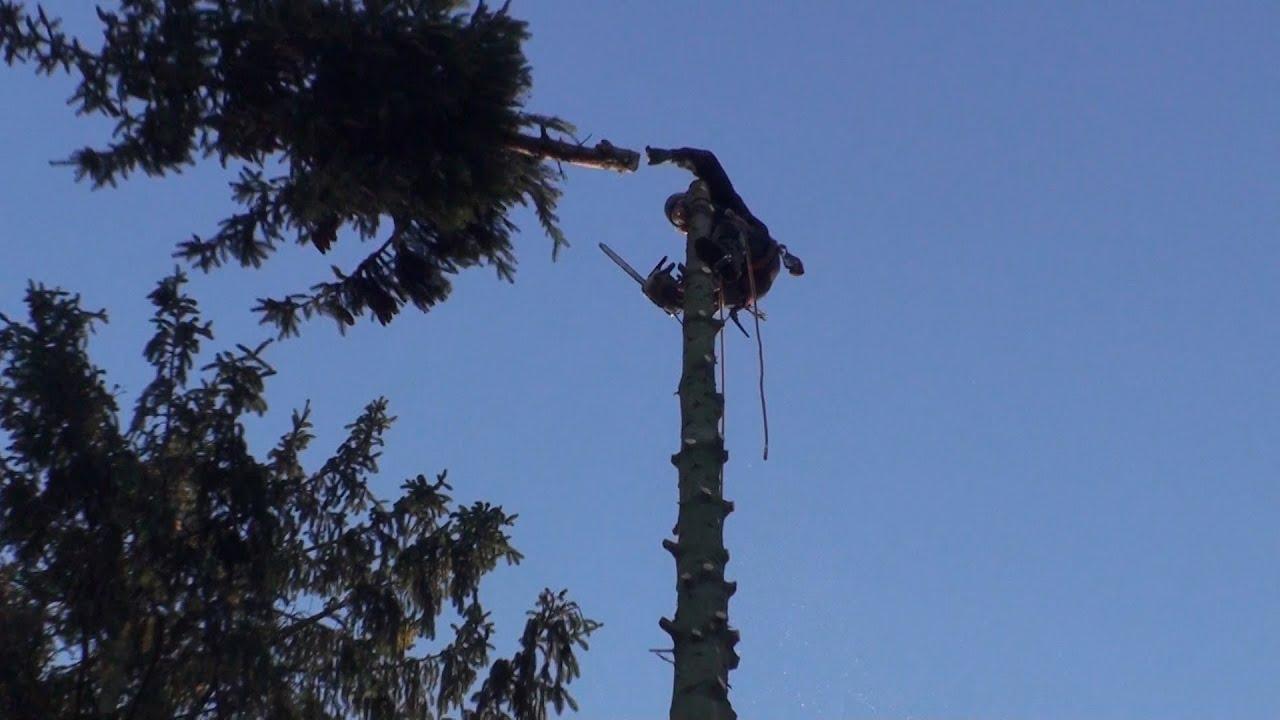 Kletterausrüstung Baum Fällen : Der kletter baumfäller youtube