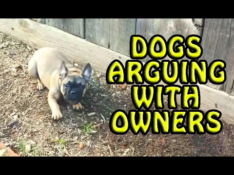 Dogs Arguing With Their Owners Compilation 2017 [NEW]
