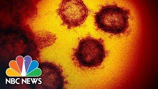 Uni. Of Washington Doctors Update Efforts Against Coronavirus   NBC News (Live Stream Recording)