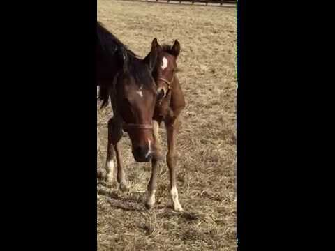 Apt (A.P. Indy) colt foal by Medaglia d'Oro born Jan. 26