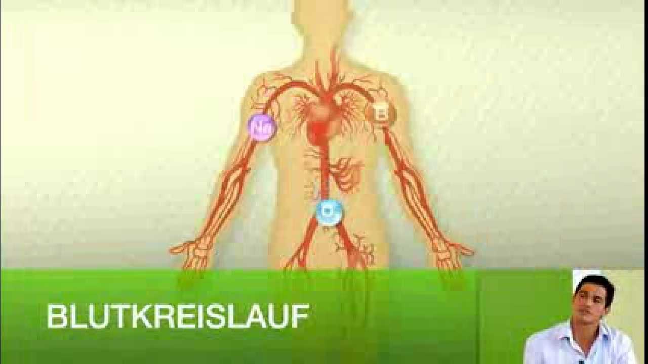 arginin nahrungsergänzung