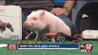 Chris P. Bacon on ABC Action News thumbnail