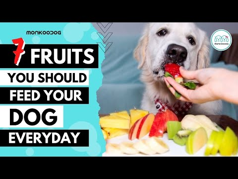 Top 7 Highly NUTRITIOUS Fruits for your dog or puppy growth.    Monkoodog