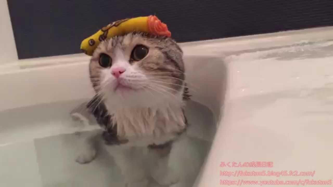 今日はふくたんとのお風呂 - You...
