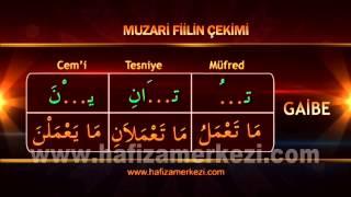 Arapça / Arapça Eğitimi / Muzari Fiil Uygulama Video - 1