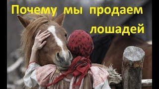 Почему мы продаём лошадей?