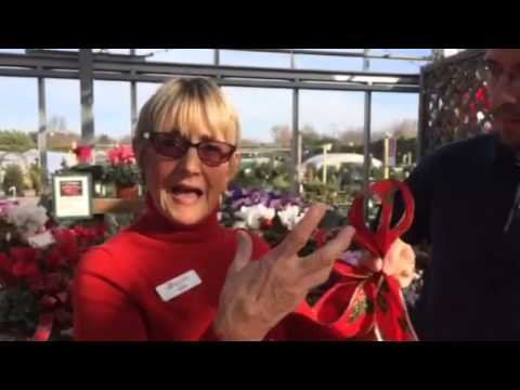 Barlow's TV Episode 34 Making Holiday Bows with Leslie & Stephen Barlow