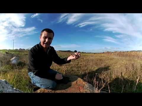 (In 360°) Herald Snake near Brackenfell, Cape Town, Western Cape, South Africa (20170517)