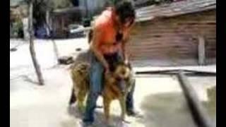 Nice Dog Riding