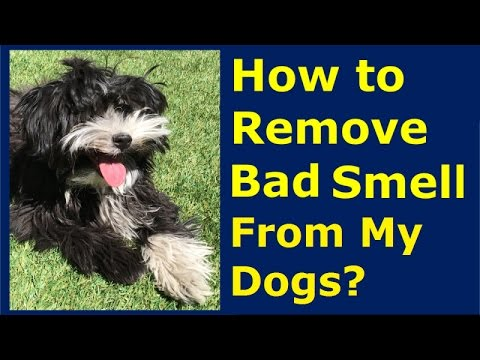 How To Remove Bad Smell From My Dog? | Healthy Clean Pet