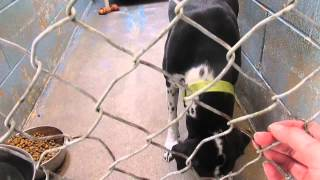 DOGS (3) for ADOPTION @ North Platte Animal Shelter ~ 4-9-2014