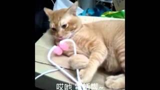 貓咪愛瘦面.wmv Thumbnail