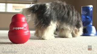 10 Genius Dog Toys That Will Make Any Puppy Smart