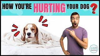 NO IGNORE ❌ estos 5 consejos importantes en el cuidado de su perro. Puede salvar a su perro de problemas de salud.