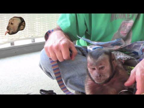 Monkey Birthday Box!