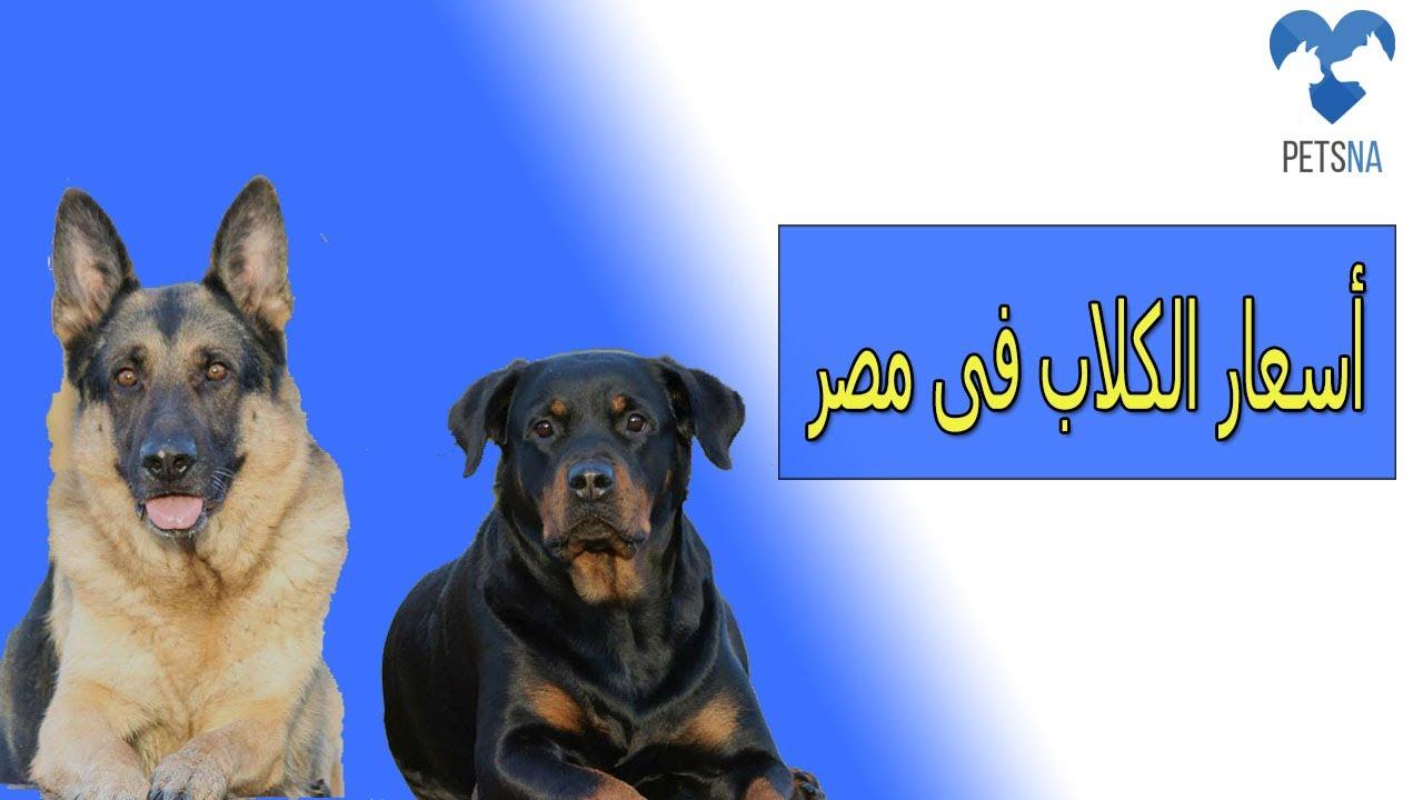 افضل انواع كلاب الحراسة فى مصر