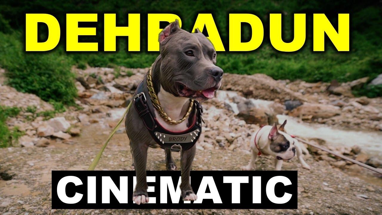 Dehradun Trip | Cinematic Trailer | Harpreet SDC
