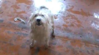 Стая собак в Липецке спасена от усыпления